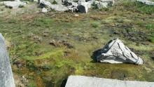 Swamp in the SE corner of the Temple of Apollo, Didim